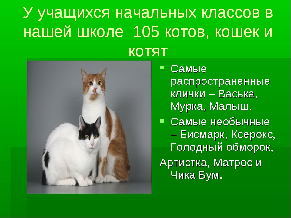 У учащихся начальных классов в нашей школе 105 котов, кошек и котят Самые рас...