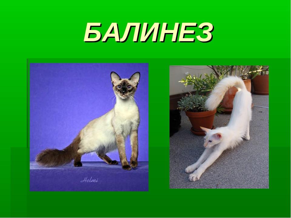 БАЛИНЕЗ