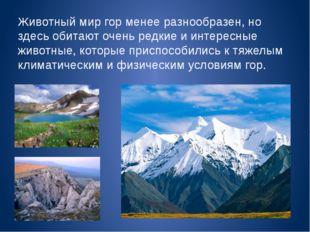Животный мир гор менее разнообразен, но здесь обитают очень редкие и интересн