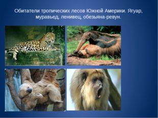 Обитатели тропических лесов Южной Америки. Ягуар, муравьед, ленивец, обезьяна