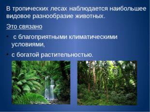 В тропических лесах наблюдается наибольшее видовое разнообразие животных. Это