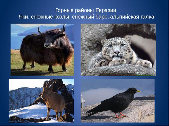 Горные районы Евразии. Яки, снежные козлы, снежный барс, альпийская галка