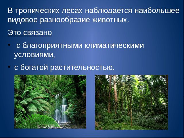 В тропических лесах наблюдается наибольшее видовое разнообразие животных. Это...