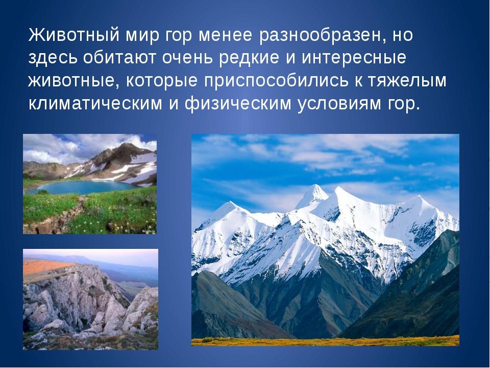 Животный мир гор менее разнообразен, но здесь обитают очень редкие и интересн...