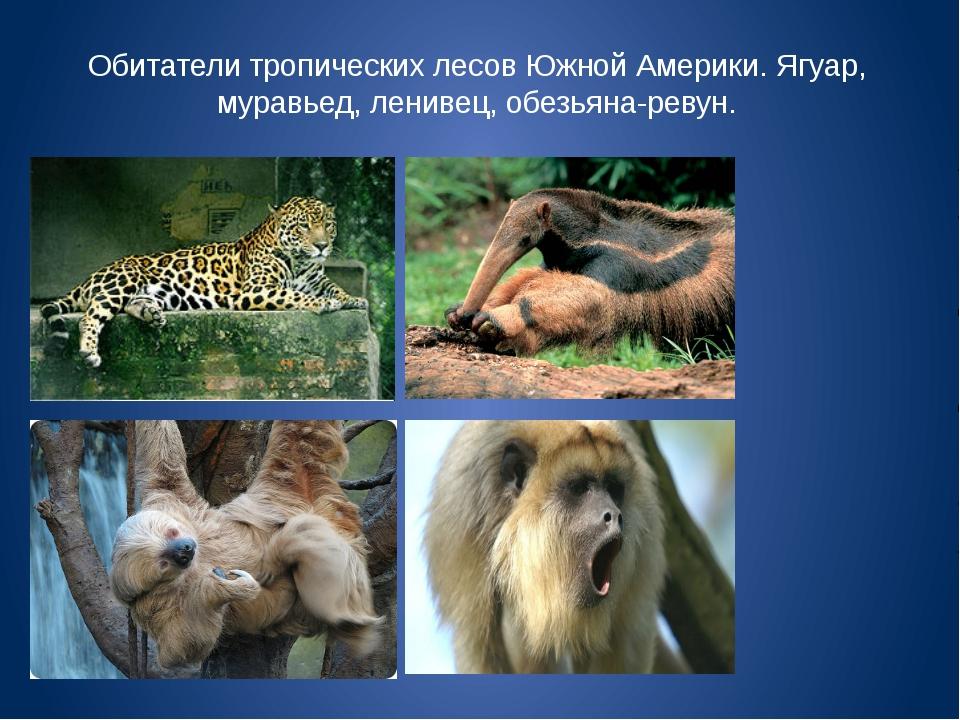 Обитатели тропических лесов Южной Америки. Ягуар, муравьед, ленивец, обезьяна...