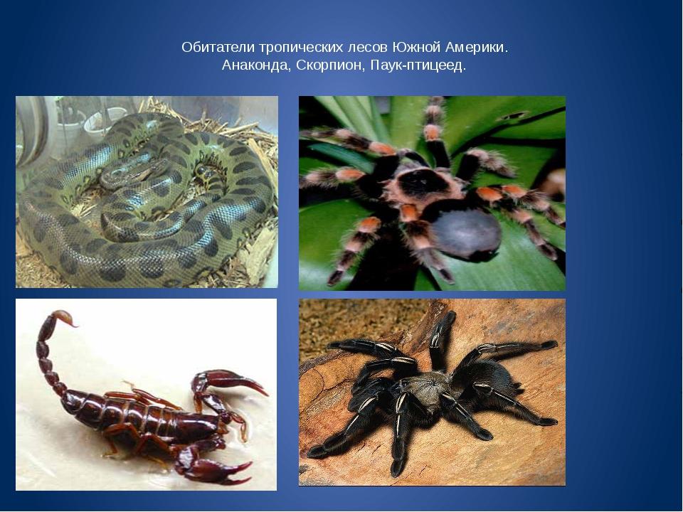Обитатели тропических лесов Южной Америки. Анаконда, Скорпион, Паук-птицеед.