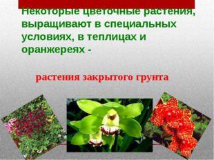 Некоторые цветочные растения, выращивают в специальных условиях, в теплицах и