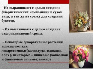 - Их выращивают с целью создания флористических композиций в сухом виде, а та
