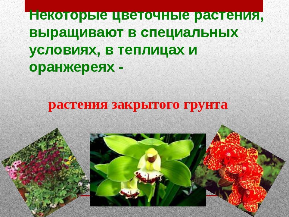 Некоторые цветочные растения, выращивают в специальных условиях, в теплицах и...