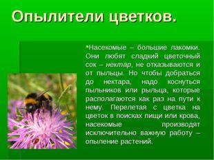 Насекомые – большие лакомки. Они любят сладкий цветочный сок – нектар, не от