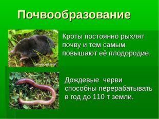Почвообразование Дождевые черви способны перерабатывать в год до 110 т земли.