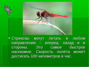 Стрекозы могут летать в любом направлении – вперед, назад и в стороны. Это са