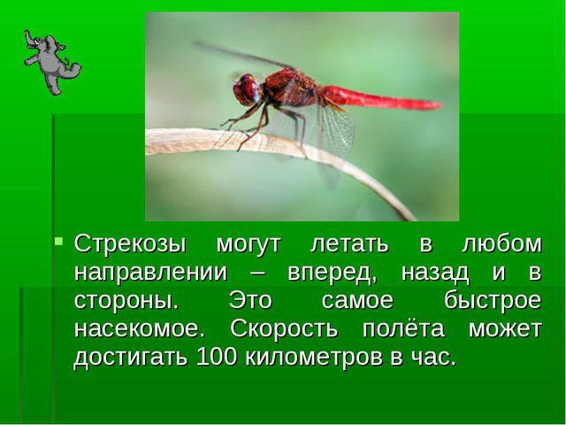 Стрекозы могут летать в любом направлении – вперед, назад и в стороны. Это са...