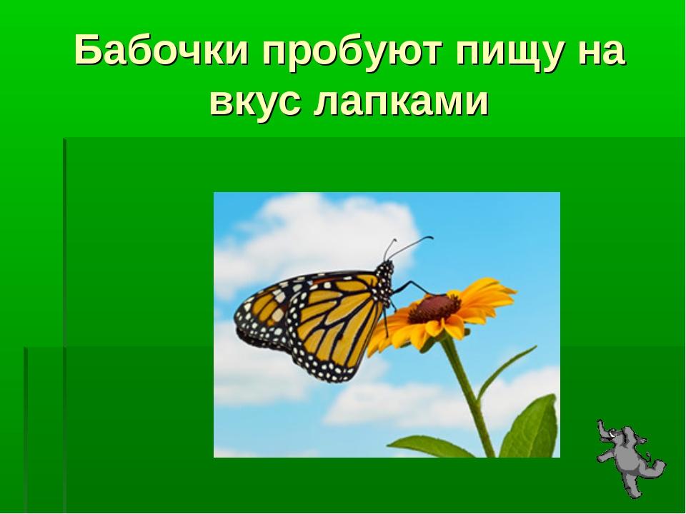 Бабочки пробуют пищу на вкус лапками