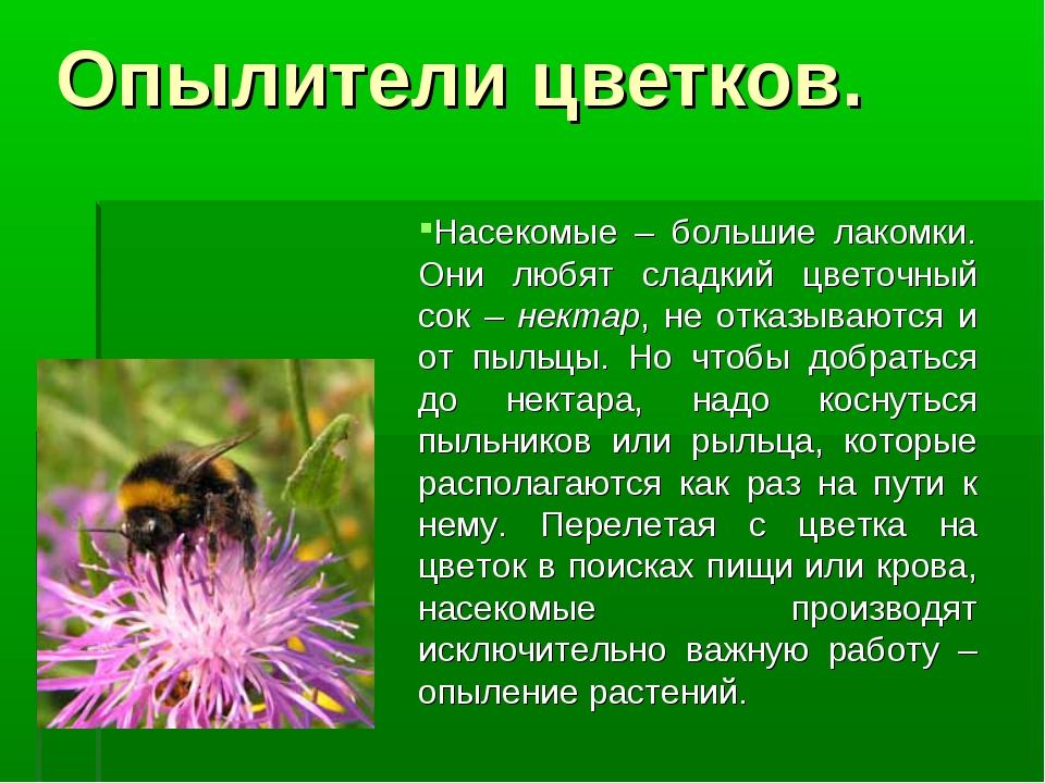 Насекомые – большие лакомки. Они любят сладкий цветочный сок – нектар, не от...