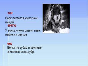 Волк- Волк питается животной пищей. У волка очень развит язык мимики и звуко