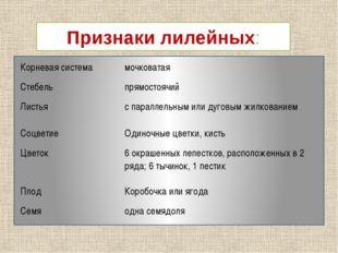 Признаки лилейных: Корневая система мочковатая Стебель прямостоячий Листья с