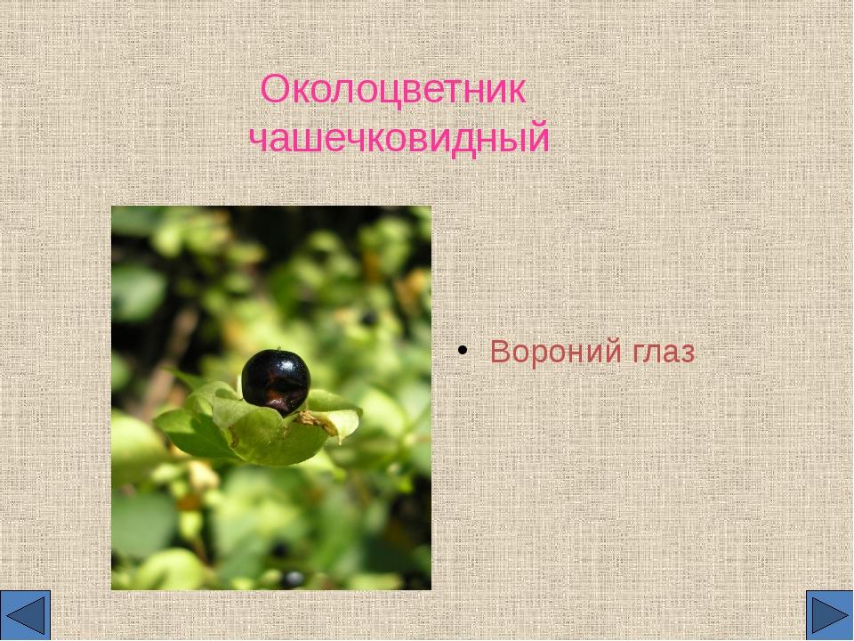 Околоцветник чашечковидный Вороний глаз