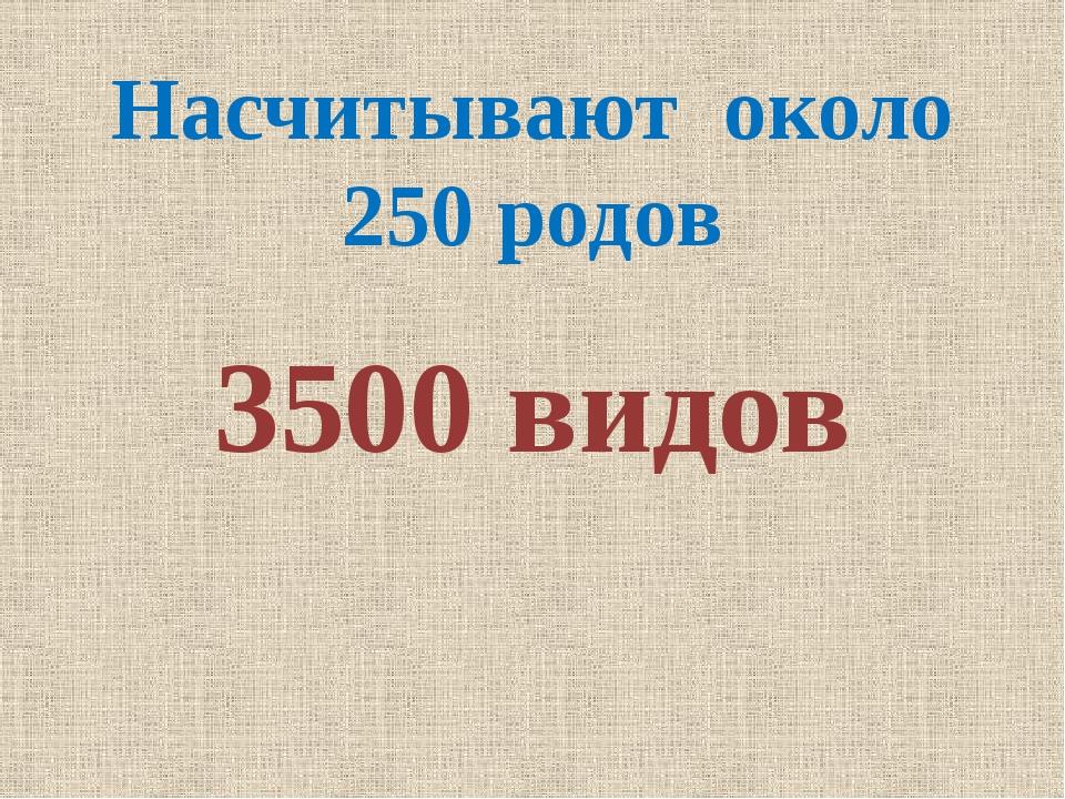 Насчитывают около 250 родов 3500 видов