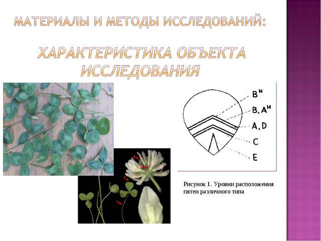 Рисунок 1. Уровни расположения пятен различного типа