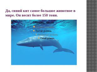 Да, синий кит самое большое животное в мире. Он весит более 150 тонн.