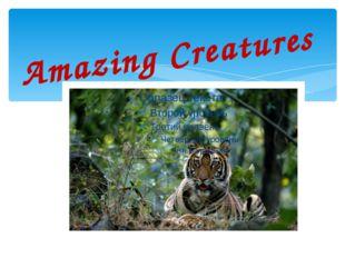Amazing Creatures