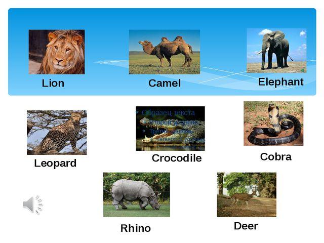Lion Camel Elephant Leopard Crocodile Cobra Rhino Deer