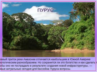 Правый приток рекиАмазонкиотличается наибольшим вЮжной Америке биологичес