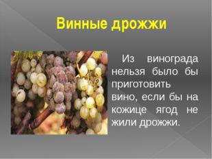 Винные дрожжи Из винограда нельзя было бы приготовить вино, если бы на кожице