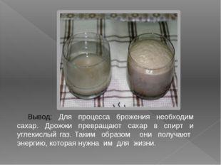 Вывод: Для процесса брожения необходим сахар. Дрожжи превращают сахар в спирт