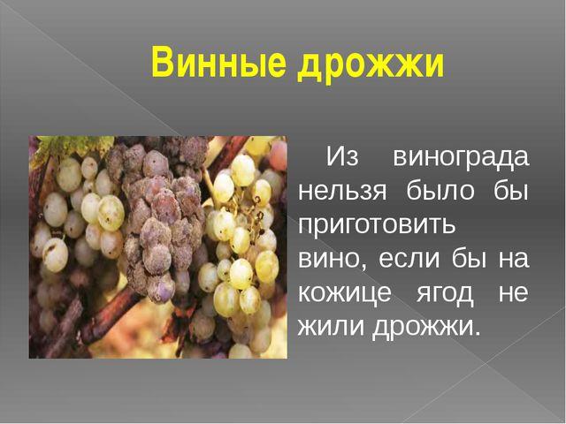Винные дрожжи Из винограда нельзя было бы приготовить вино, если бы на кожице...