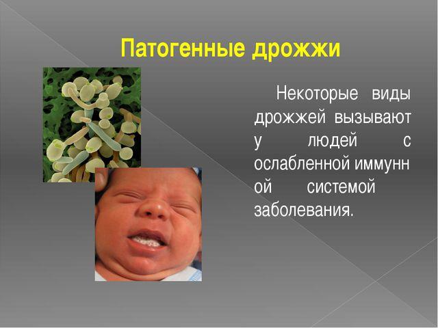Патогенные дрожжи Некоторые виды дрожжей вызывают у людей с ослабленнойимму...