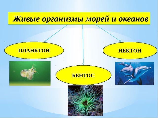 Живые организмы морей и океанов НЕКТОН ПЛАНКТОН БЕНТОС