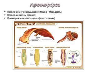 Появление 3его зародышевого мешка – мезодермы; Появление систем органов; Симм
