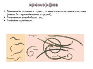 Появление 3его кишечника: заднего, заканчивающегося анальным отверстием (рань