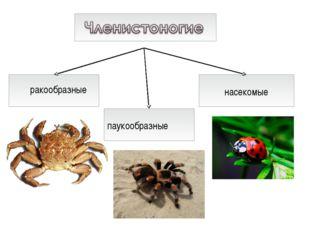 ракообразные насекомые паукообразные
