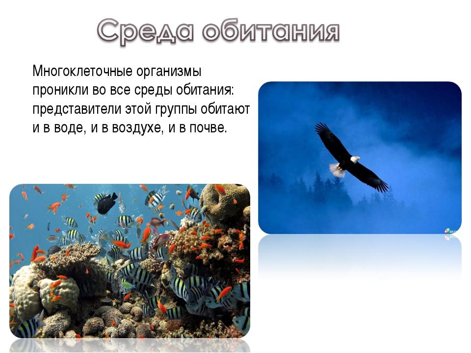 Многоклеточные организмы проникли во все среды обитания: представители этой г...