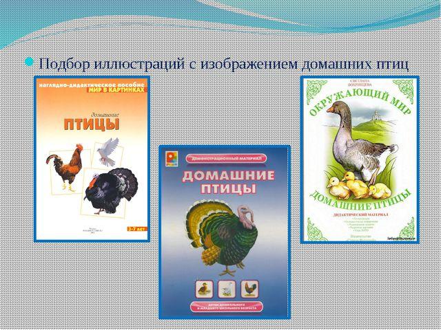 Подбор иллюстраций с изображением домашних птиц