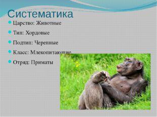 Систематика Царство:Животные Тип:Хордовые Подтип: Черепные Класс:Млекопита
