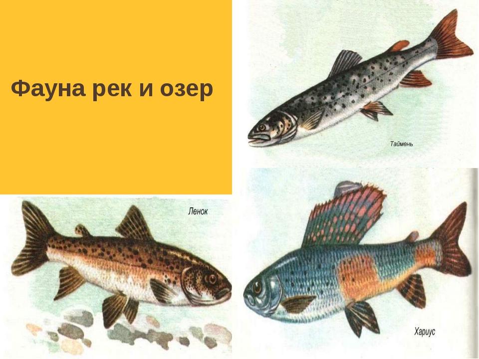 Красная книга: архар (горный баран) ирбис (снежный барс) монгольская дрофа а...