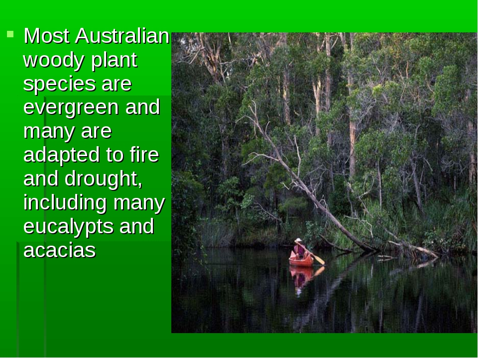 Most Australian woody plant species are evergreen and many are adapted to fir...