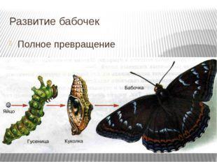 Развитие бабочек Полное превращение