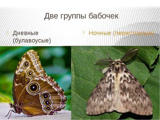 Две группы бабочек Дневные (булавоусые) Ночные (перистоусые)