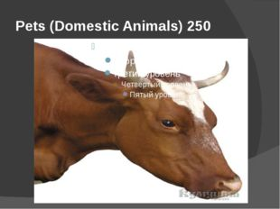 Pets (Domestic Animals) 250