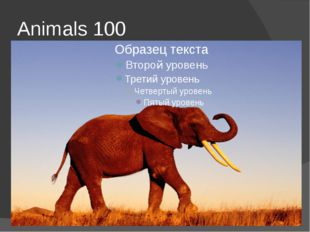 Animals 100