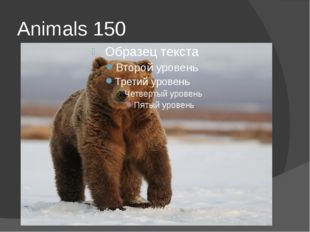 Animals 150