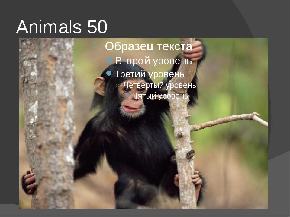 Animals 50