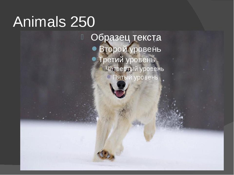 Animals 250