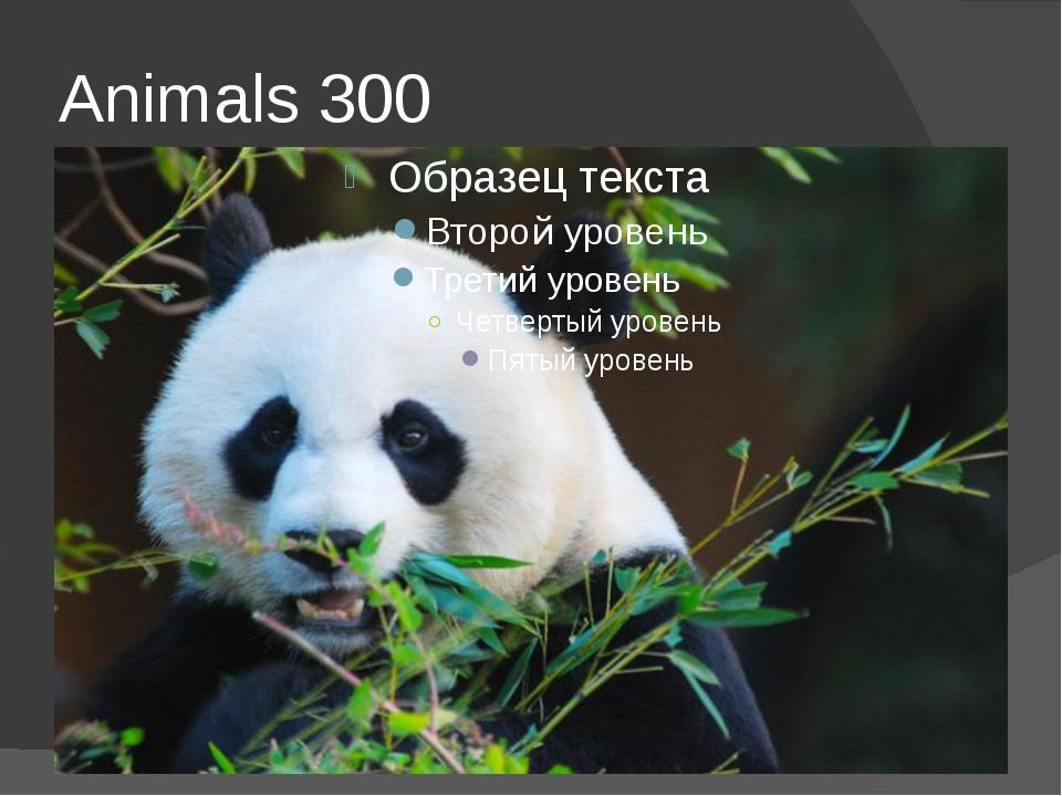 Animals 300
