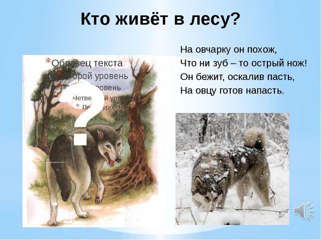 Кто живёт в лесу? На овчарку он похож, Что ни зуб – то острый нож! Он бежит,...